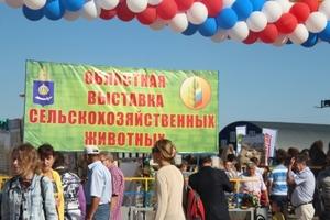 На Астраханской выставке были определены лучшие организации по племенному животноводству