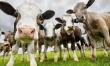 В апреле в Москве пройдет съезд селекционеров в области животноводства