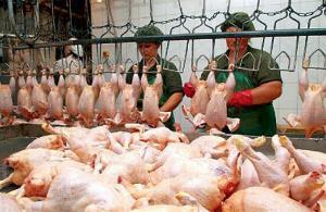 Право поставок птицеводческой продукции в Китай получили 23 компании РФ