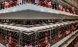 Крупнейшую птицефабрику Камчатки подозревают в сбыте некачественной продукции