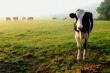 Животноводческие предприятия Кабардино-Балкарии работают в штатном режиме