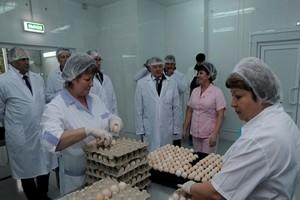 На АО «Птицефабрика Калужская» открылся новый инкубаторий