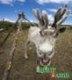 Деликатес из оленя – в Красноярск