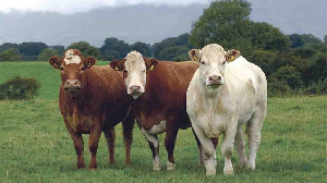 В Новосибирске обсудили развитие мясного животноводства
