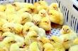 В Костромской области реконструируют птицефабрику