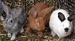 В Малосердобинском районе открылась кроликоферма