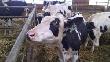 В Кузбассе открывается эмбриональный центр племенного животноводства