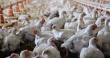 Часть имущественного комплекса птицефабрики «Надеждинская» ушла с аукциона за ₽19,5 млн