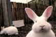 Половину потребления мяса кроликов в России покроют три новые фермы на Северо-Западе