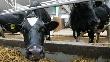 Объем господдержки фермеров Подмосковья увеличится в 2012 г в три раза