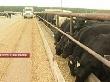 В Липецке обсудили перспективы развития мясного скотоводства страны