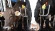 Животноводы Подмосковья получили 904,4 млн рублей кредитов в 2011 году