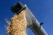 Профицит зерна в Красноярском крае создает давление на рынок — краевой комитет НСЗ