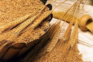 Прогноз производства зерновых в ЕС снова понижен