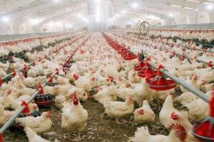 В Акмолинской области Казахстана ведется строительство птицефабрики