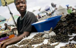 Глобальный дефицит продовольствия и поиск более питательных и экологичных продуктов заставляет обращаться к нетрадиционным источникам питания — эксперт ООН