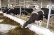 Подмосковье поддержало предложение улучшить условия содержания животных на фермах