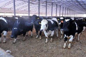 В Омской области построили первую ферму из поликарбоната