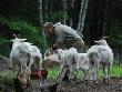 В Красноярском крае начинающие фермеры получат деньги на развитие дела