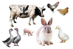 Использование антибиотиков для сельхозживотных сократилось впервые с 2009 года