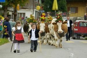 В Швейцарии коров торжественно проводили в стойла