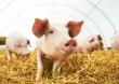 Russian Meat&Feed Industry — 2020 XI отраслевая бизнес-конференция состоится 10 апреля