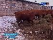 Министр сельского хозяйства и продовольствия Самарской области посетил Сергиевский район