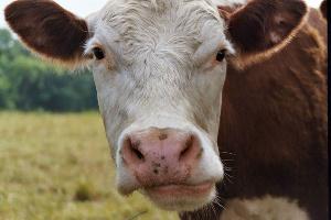 Индонезия устанавливает цель по импорту мяса