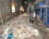 В Калужской области от голода погибли 300 тысяч кур-несушек