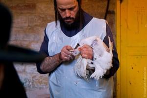 ФСИН заявила о запуске цеха по производству кошерной курятины