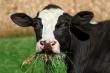 Второй этап противоклещевых обработок скота начали в Ростовской области