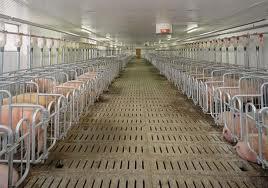 Оборудование для механизации животноводческих ферм