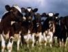 В Горном Алтае разрабатывают программу развития агропромышленного комплекса