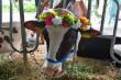 Продажу фермы «Котиково» в Хабаровском крае требуют аннулировать