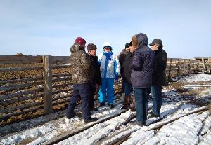 Казахский холдинг «Агроком» готов закупить в Бурятии 20 тысяч голов КРС