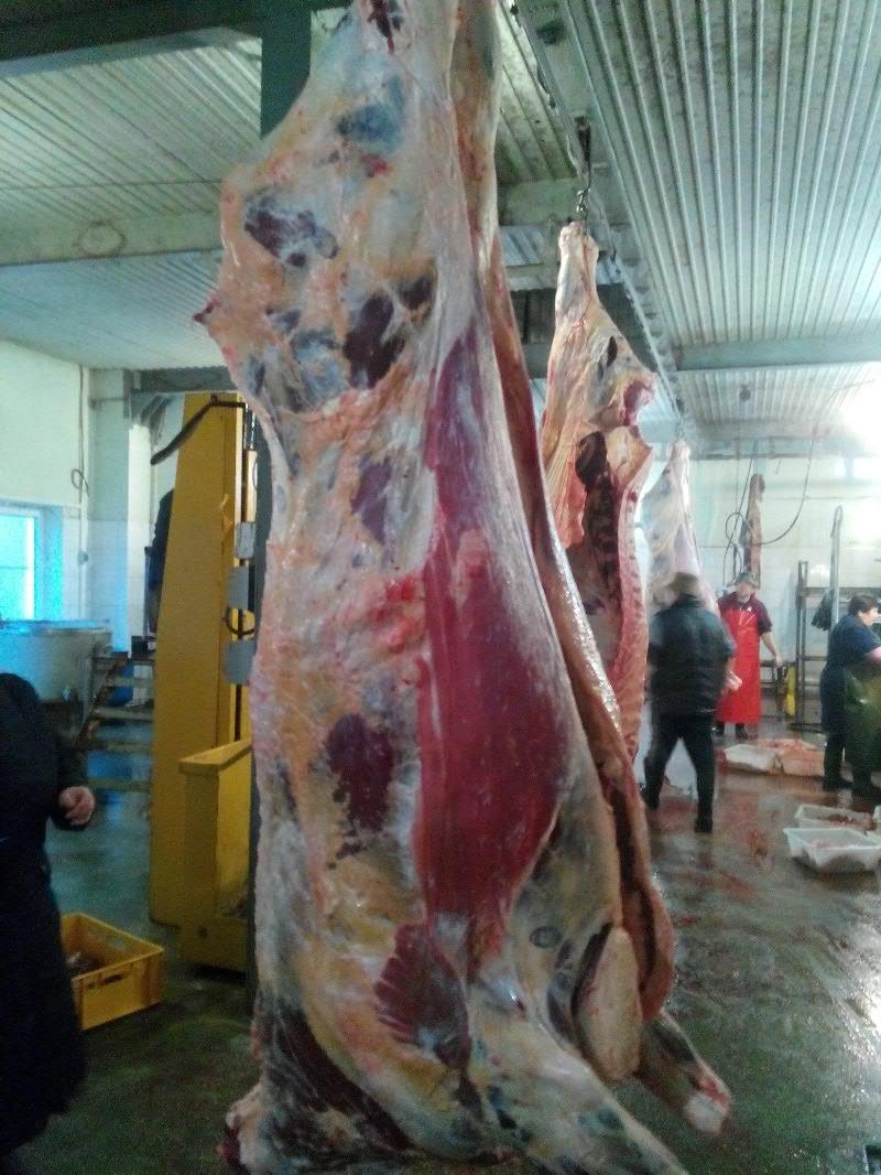 Мясо говядина свинина продам Москва Белгород  Орел
