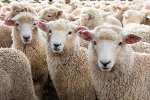 «Дамате» начала строить откормочную площадку для овец в Карачаево-Черкесии