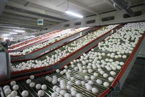 В Казахстане Аркалыкская птицефабрика намерена производить яичный порошок