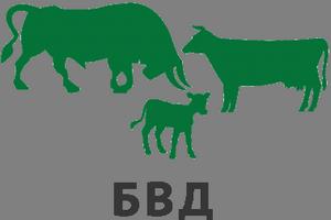 Объём производства БВД в России в марте 2015 года