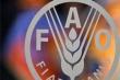 ФАО снизила прогноз мирового сбора пшеницы