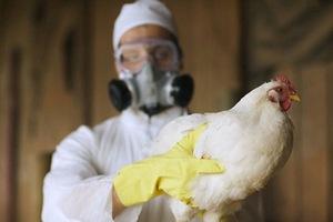 Вспышка птичьего гриппа во Франции вышла из карантинной зоны