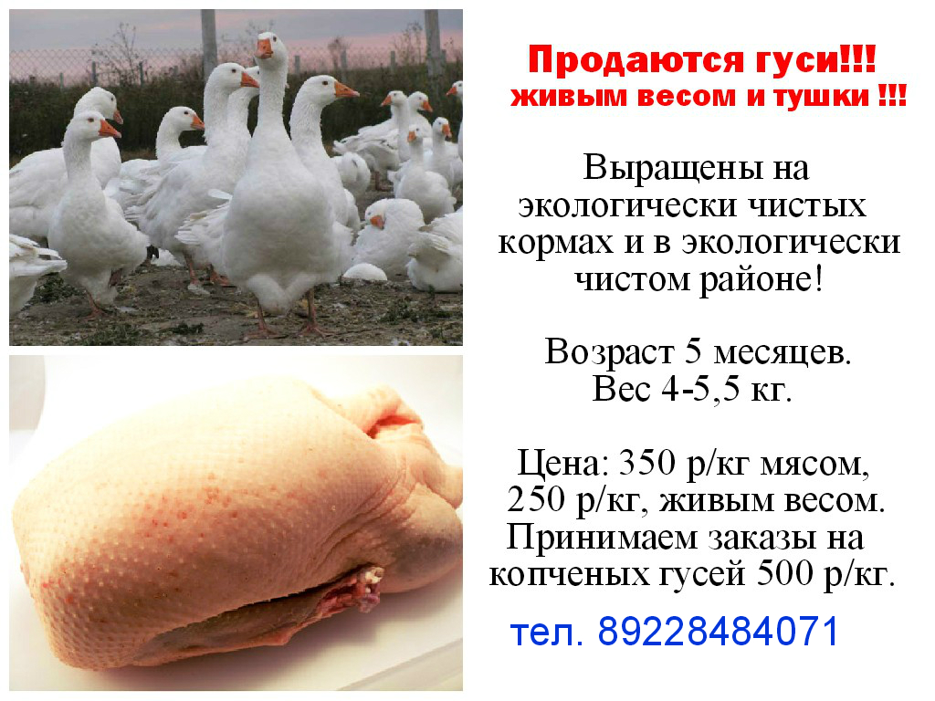 Продаю гусей