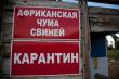В трех районах Саратова ввели режим ЧС из-за чумы свиней