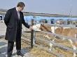 Сектор мясного скотоводства: в Тюмени назначен руководитель новой структуры