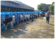 В Заинском районе выросло поголовье скота