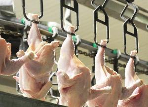 Производство мяса птицы в России стало восстанавливаться