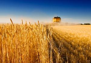 Минсельхоз США снова повысил прогноз экспорта пшеницы из РФ в этом сельхозгоду