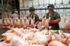 В Саратовской области будет произведено свыше 25 тыс. тонн мяса птицы