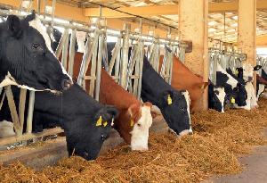 Крупный мясной комплекс на 15 тыс голов хотят создать в Томской области за несколько лет