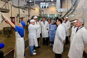 В Казахстане создается межрегиональная кооперация в мясном скотоводстве